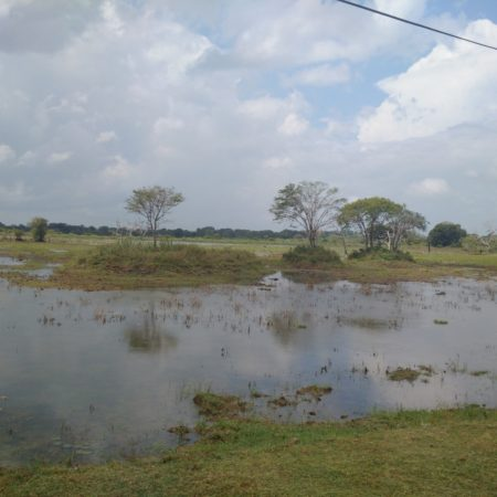 Land in Hambantota. This area is mostly rural, with very little development. Image: Wade Shepard.