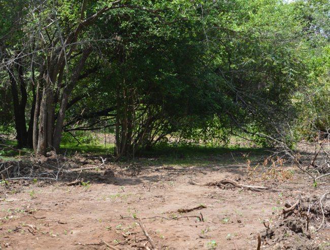 A cleared forest area in Ehetuwewa. Image courtesy EFL