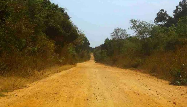 The illegal cut and constructed road through the national park. Image courtesy EFL
