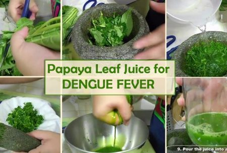 Papaya-Leaf-Juice-for-Dengue-620×303