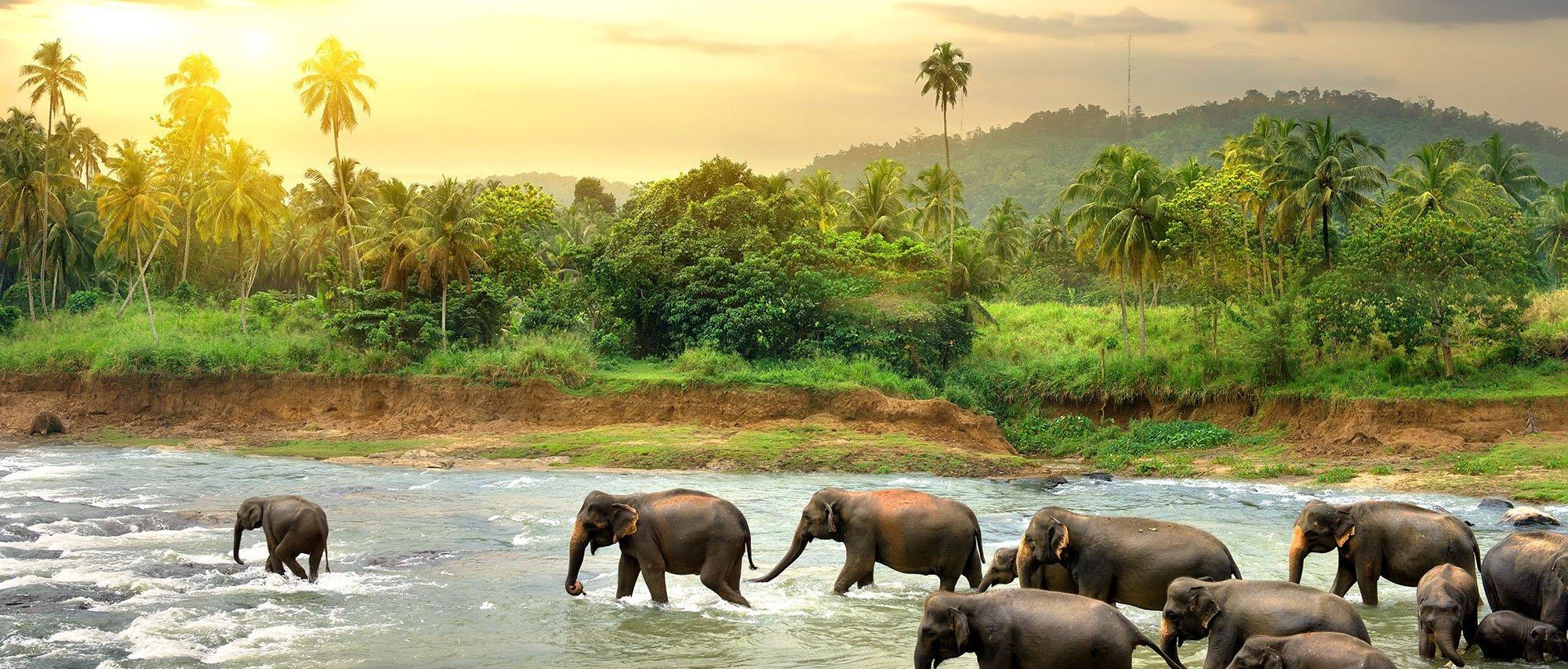 srilanka.original